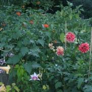 English Garden (Winnipeg) flower bed