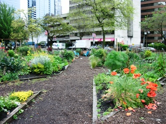 Community Garden Vancouver
