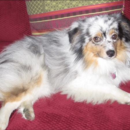 Lost Dog Levi