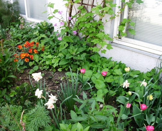 Apartment Buidling Flower Bed
