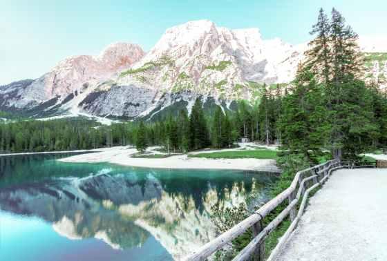 alpine conifers daylight environment